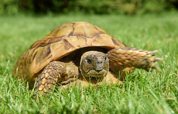 Rùa đi lạc trở về nhà chủ sau 1 năm nhưng chi tiết về tốc độ khiến mọi người bất ngờ