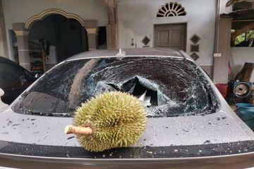 Quả sầu riêng được rao bán giá 'trên trời' sau khi rơi trúng ô tô làm vỡ kính