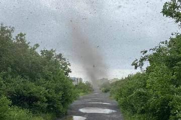 Khoảnh khắc kinh hoàng 'lốc xoáy' hàng triệu con muỗi đen kịt bầu trời