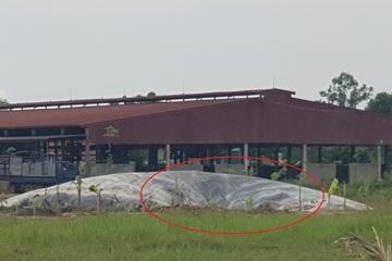 Hà Tĩnh: Chủ tịch xã không làm việc nổi vì trang trại lợn trái phép bốc mùi nồng nặc