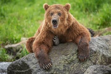Dành nhiều ngày sống trên cây vì bị gấu nâu truy đuổi gắt gao