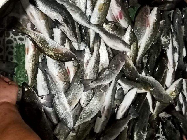 Cá chết,Sông Lạch Bạng
