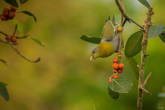 Chim hút mật no nê rồi ngả lưng ngủ trên cánh hoa, khoảnh khắc chỉ có một lần trong đời