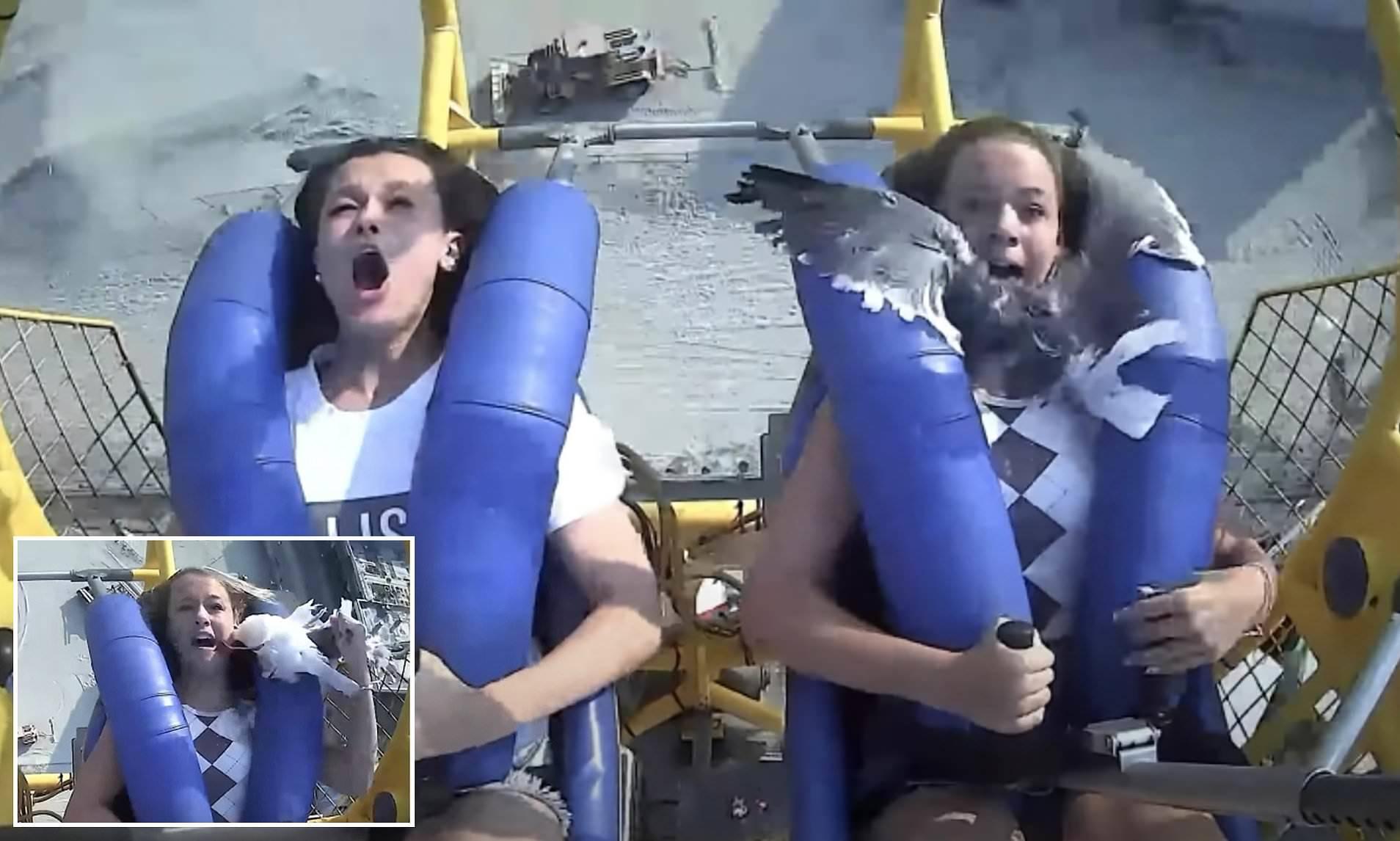 Mòng biển lao thẳng vào mặt du khách khi chơi trò cảm giác mạnh
