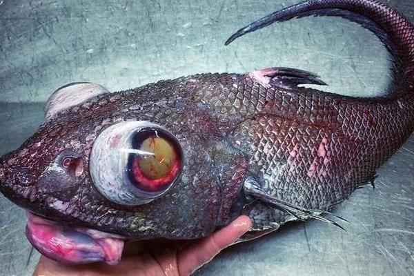 Hé lộ bộ sưu tập 'quái vật biển' ngư dân bắt được trong nhiều năm qua