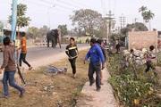 Đám đông 'duyệt binh' để xua đuổi con voi khổng lồ ở Ấn Độ