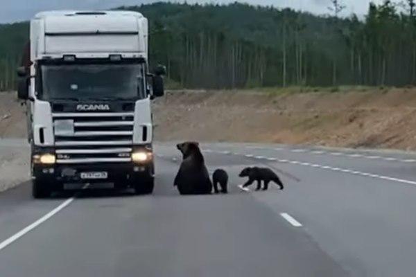 Tài xế ở Nga 'hoảng hồn' bấm còi liên tục vì lý do này