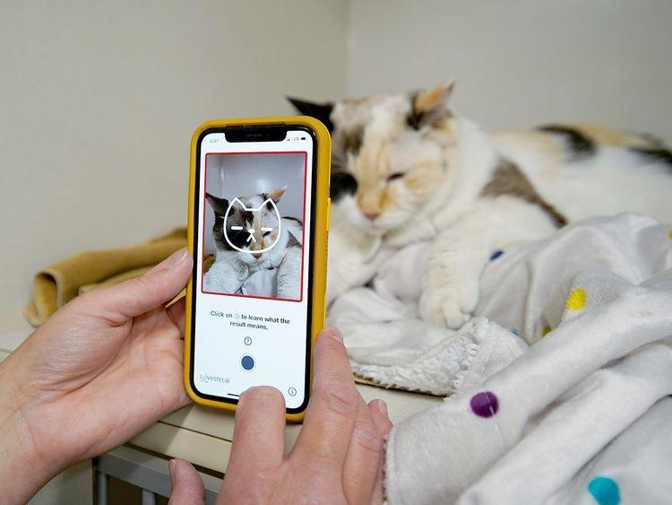 Ứng dụng độc đáo nhận biết con mèo cưng của bạn có hạnh phúc không