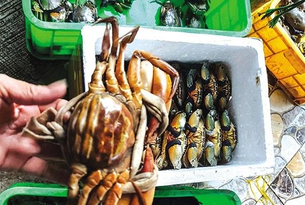 Giá cua biển,Giá sầu riêng Ri6,Nông sản,Hải sản