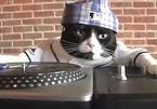 Mèo tự mở nhạc khi chủ nhân vắng nhà khiến hàng xóm 'choáng váng'