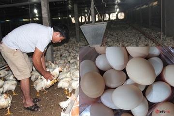 Nghịch lý giá gà rẻ hơn rau, trứng lại khan hiếm giá đắt đỏ