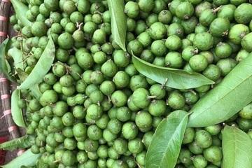 Sấu Việt Nam xuất khẩu sang Australia bán với giá hơn 300.000/kg