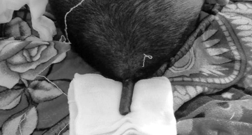 Nghệ An: Trèo hái nhãn, người đàn ông bị que thép đâm xuyên đầu