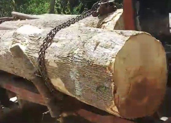 Đắk Lắk: Hơn 40 người vác dao uy hiếp bảo vệ rừng để cướp tang vật