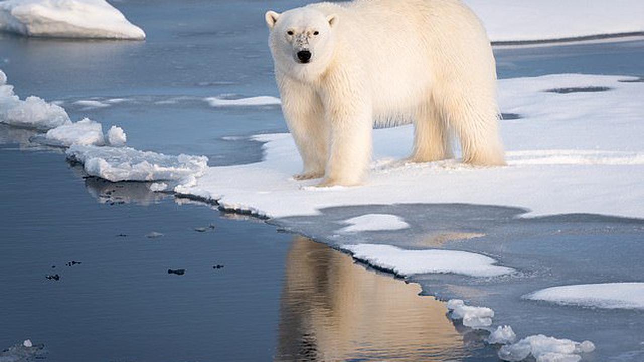 Gấu bắc cực tấn công đoàn quay phim tài liệu ở Greenland
