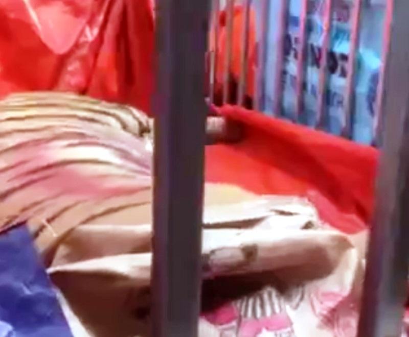 Phát hiện hàng chục con hổ bị nuôi nhốt trong nhà dân ở Nghệ An