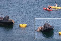 Hải mã thực hiện chuyến đi vòng quanh thế giới ghé chân ở Ireland