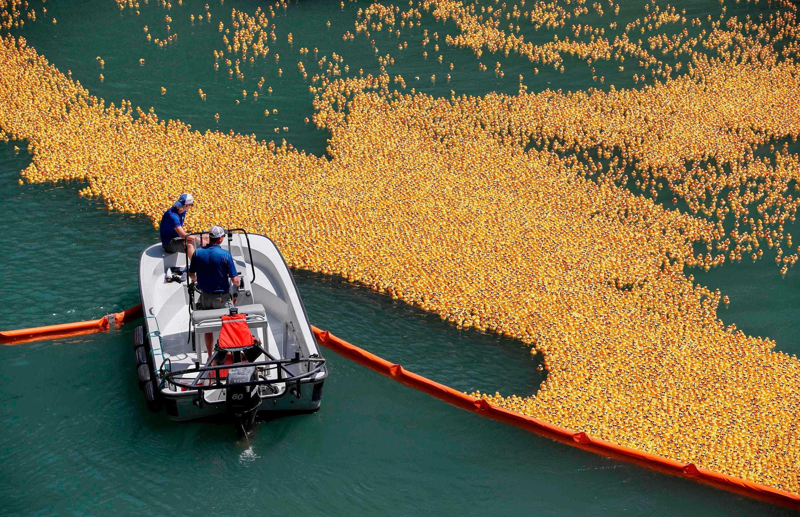 65.000 con vịt nhựa xuất hiện trong cuộc thi độc đáo bậc nhất thế giới