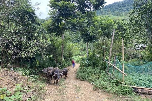 Lạng Sơn: Hiệu quả từ hỗ trợ sinh kế vùng đồng bào dân tộc thiểu số