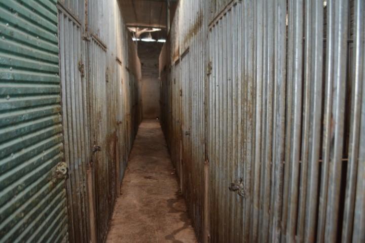 Hành trình triệt phá vụ nuôi nhốt 17 cá thể hổ trong nhà dân ở Nghệ An