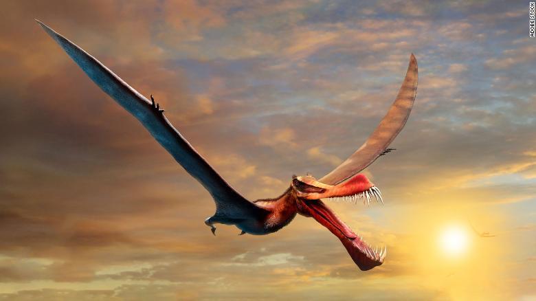 Rồng bay đáng sợ ăn thịt cả khủng long từng thống trị Australia