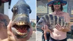 Cá kỳ dị miệng đầy răng bị bắt ngoài khơi bờ biển Bắc Carolina