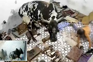 Khoảnh khắc kinh hoàng khi bò tót điên cuồng lao vào nhà dân húc loạn xạ