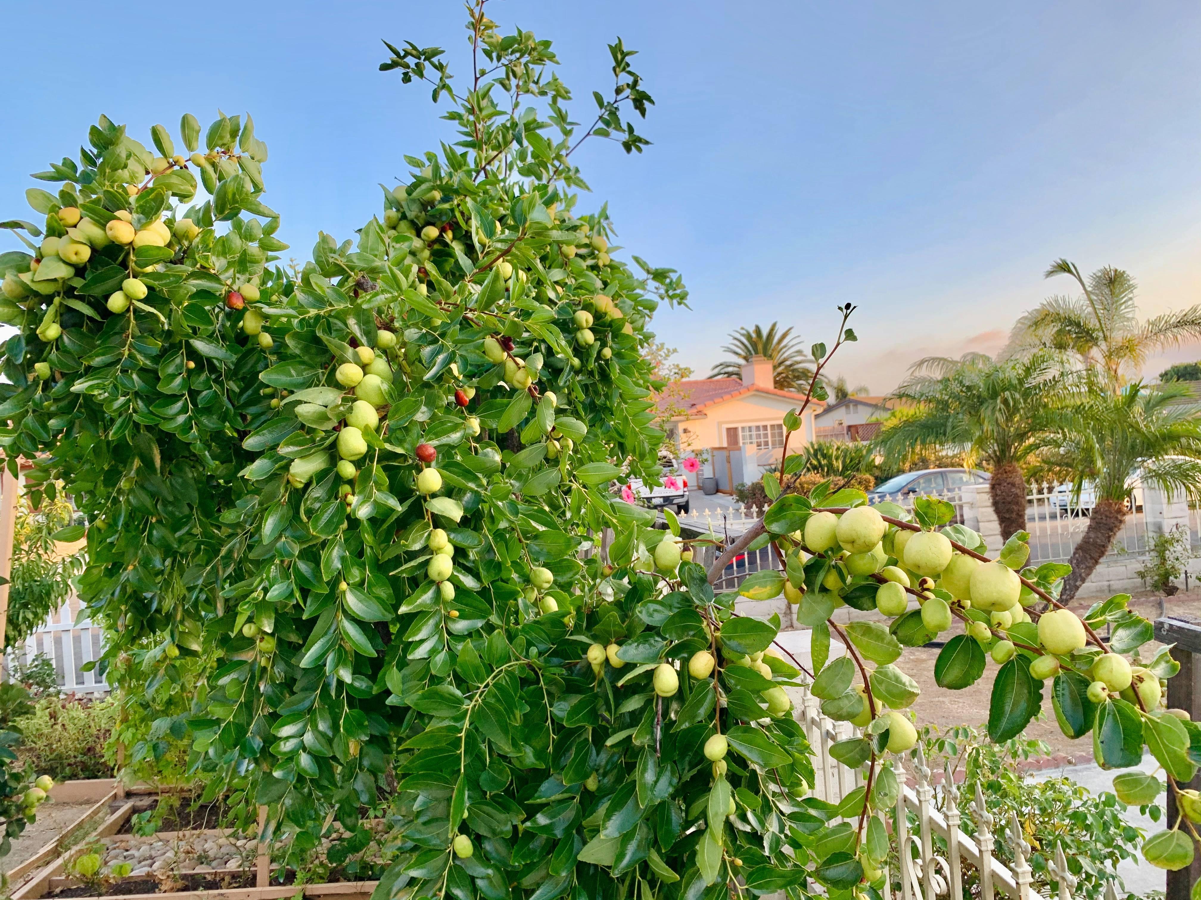 khu vườn thuần Việt,khu vườn đẹp,cách làm vườn