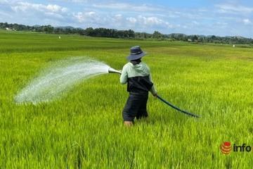 Người dân Tây Nguyên dùng 'vòi rồng' tưới lúa giữa mùa mưa