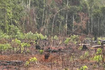 Gần 20 đối tượng bị phạt hơn 1,5 tỉ đồng về tội phá rừng phòng hộ