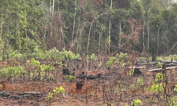 Quảng Khê,xã Đắk R'Măng,huyện Đắk G'Long,Đắk Nông,phá rừng