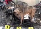 Trộm chó mang súng bắn điện và kiếm đi hành nghề, 2 ngày bắt 7 con chó