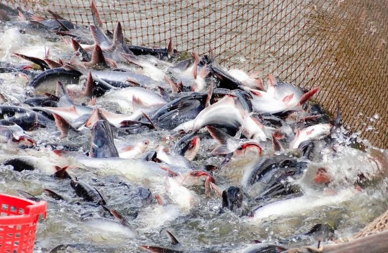 Doanh nghiệp đầu tư dự án nuôi trồng thủy sản được hỗ trợ tối đa 15 tỷ đồng