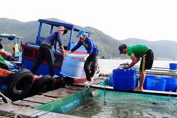 Sản lượng nuôi trồng thủy sản toàn tỉnh Bình Định ước đạt 5.700 tấn