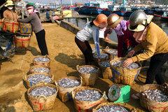 Bình Thuận tăng cường cấp đông trữ hải sản trước đại dịch Covid-19