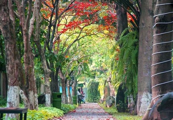 Khu đô thị nói không với những cung đường, vỉa hè bê tông tại Việt Nam
