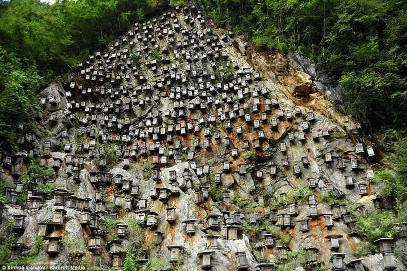700 hộp gỗ cũ bẩn treo trên vách đá cao chót vót ở Trung Quốc có tác dụng bất ngờ