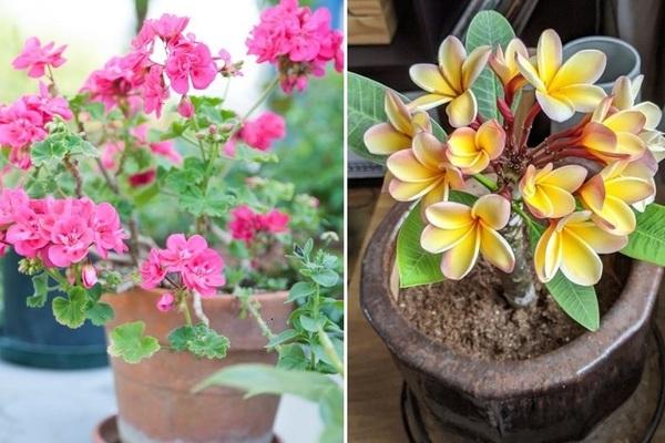 7 loại cây dễ trồng biến không gian sống thành thiên đường mùi hương