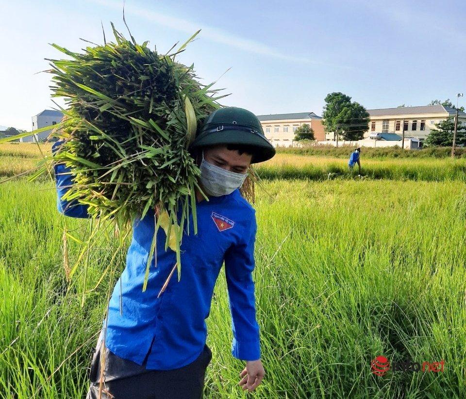Dân yên tâm cách ly, lúa chín có người gặt đưa về tận nhà