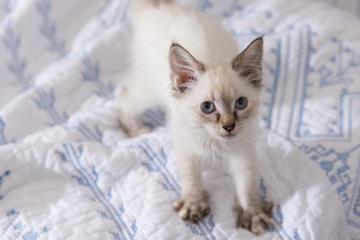 Điều đặc biệt khi mèo làm động tác 'nhào bột' không phải ai cũng biết