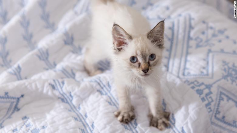 mèo,thú cưng