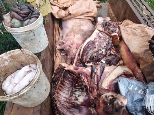 70 con lợn nhiễm virus dịch tả châu Phi vẫn bán cho thương lái thịt tuồn ra thị trường