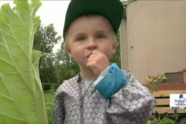 Bé trai 4 tuổi bỗng 'nổi như cồn' trên mạng nhờ tài ăn rau nhà trồng