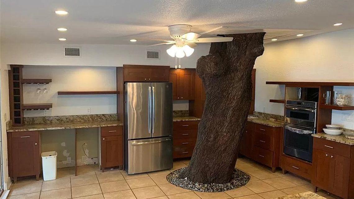 Độc lạ căn nhà có cây sồi khổng lồ trăm tuổi mọc xuyên qua