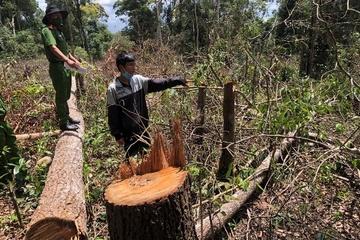 Khởi tố, bắt giam 7 đối tượng hủy hoại rừng ở Đắk Nông
