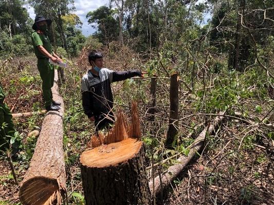 Đắk Nông,phá rừng,hủy hoại rừng