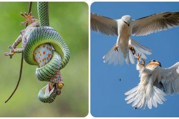 Ấn tượng những bức ảnh cuộc sống thiên nhiên hoang dã