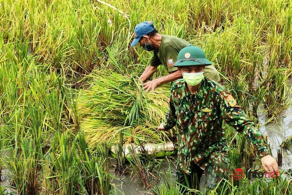 Bộ đội Biên phòng vừa trực chốt chống dịch, vừa hỗ trợ người dân gặt lúa chạy mưa lũ