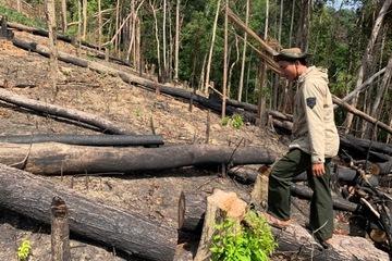 Đắk Lắk: Hàng ngàn hecta rừng biến mất chỉ trong 8 tháng