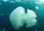 Đi tắm biển với bố mẹ, cậu bé 9 tuổi tử vong vì bị sứa cắn ở Thái Lan